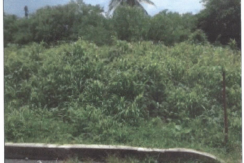 (Land For Sale) Joefield Trace,Carnbee, Tobago.